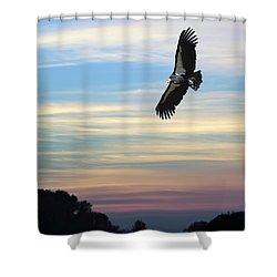 Free To Fly Again - California Condor Shower Curtain