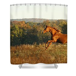 Freedom In The Late Afternoon Shower Curtain