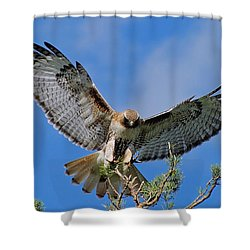 Freeze Frame Shower Curtain