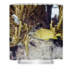 French Grunt Swimming Shower Curtain