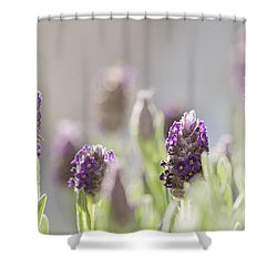 French Lavendar Buds Shower Curtain by Mary Angelini