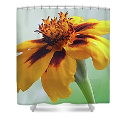 French Marigold Shower Curtain
