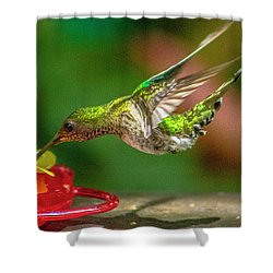Frequent Flyer 3 Shower Curtain