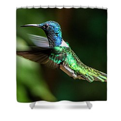 Frequent Flyer, Mindo Cloud Forest, Ecuador Shower Curtain