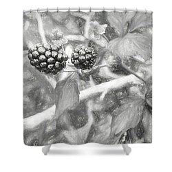 Fresh Alabama Blackberries In Black And White Shower Curtain