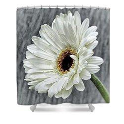 Fresh As A Daisy Shower Curtain by Karen Stahlros