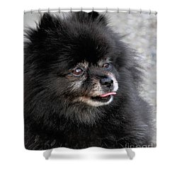 Shower Curtain featuring the photograph Fresh Dog by Debbie Stahre