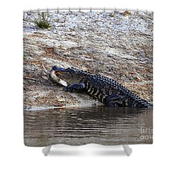 Shower Curtain featuring the photograph Fresh Fish by Al Powell Photography USA