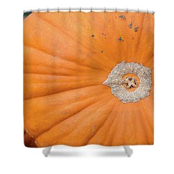 Shower Curtain featuring the photograph Fresh Organic Orange Giant Pumking Harvesting From Farm At Farme by Jingjits Photography