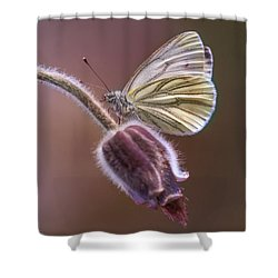 Fresh Pasque Flower And White Butterfly Shower Curtain by Jaroslaw Blaminsky