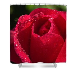 Fresh Rose Shower Curtain