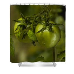 Fresh Tomato Shower Curtain