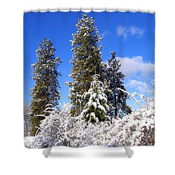 Shower Curtain featuring the photograph Fresh Winter Solitude by Will Borden