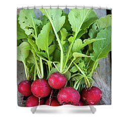 Shower Curtain featuring the photograph Freshly Picked Radishes by Elena Elisseeva