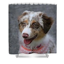 Friend  Shower Curtain by Dennis Baswell