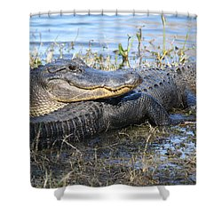 Friend, I Got Your Back Shower Curtain