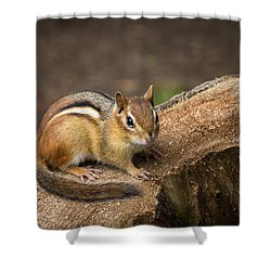 Shower Curtain featuring the photograph Friendly Chipmunk by Paul Miller