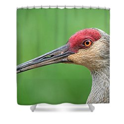 Friendly Fellow Shower Curtain