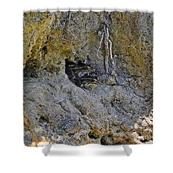 Shower Curtain featuring the photograph Friendly Frogs by Al Powell Photography USA