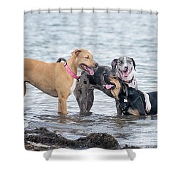 Friends Shower Curtain by Stephanie Hayes