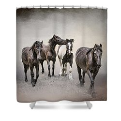 Friesian Horses The Boys And Baby Sister Shower Curtain