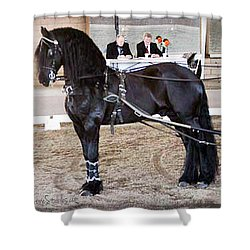 Friesian Stallion Under Harness Shower Curtain
