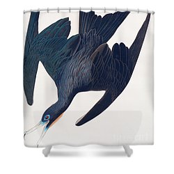 Frigate Penguin Shower Curtain by John James Audubon