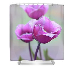 Shower Curtain featuring the photograph Fringe Tulips by Jessica Jenney