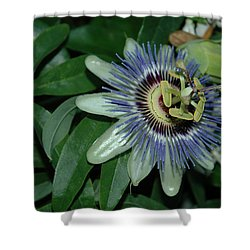 Fringed Color Shower Curtain