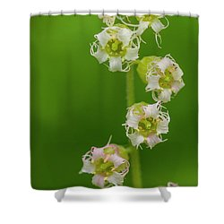 Fringed Cups Shower Curtain