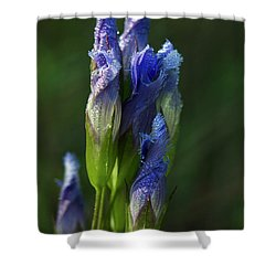 Fringed Getian With Dew Shower Curtain by Ann Bridges