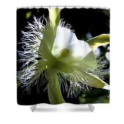 Fringed Orchid Shower Curtain