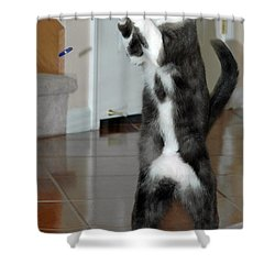 Frisbee Cat Shower Curtain