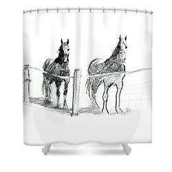 Friesian Horses Shower Curtain