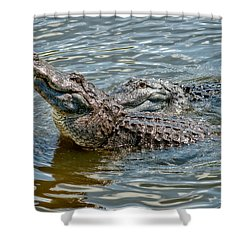Shower Curtain featuring the photograph Frisky In Florida by Christopher Holmes