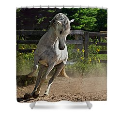 Frisky Lady Shower Curtain by Judy  Johnson