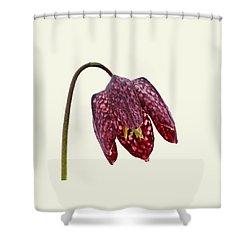 Fritillaria Meleagris Cream Background Shower Curtain