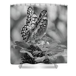 Fritillary Butterfly Shower Curtain