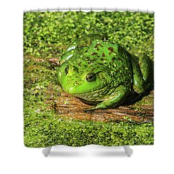 Frog And Duck Weed Shower Curtain by Edward Peterson