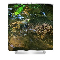 Shower Curtain featuring the photograph Frog Days Of Summer by Bill Pevlor