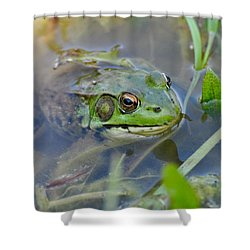 Frog Hiding In The Pond Shower Curtain