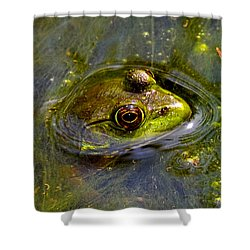 Frog In A Stream 003 Shower Curtain