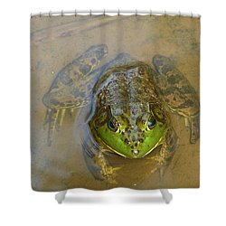 Frog Of Lake Redman Shower Curtain by Donald C Morgan