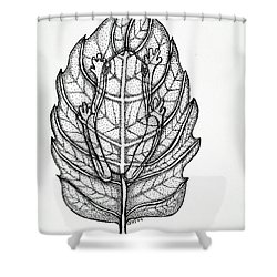 Frog On A Leaf Shower Curtain by Nick Gustafson