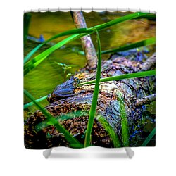 Frog On A Log 1 Shower Curtain