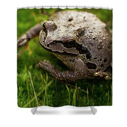 Frog On The Grass Shower Curtain by Jean Noren