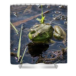 Frog  Shower Curtain by Trace Kittrell