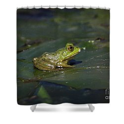 Shower Curtain featuring the photograph Froggy 2 by Douglas Stucky