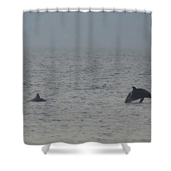 Frolicking Dolphins Shower Curtain by Bill Cannon