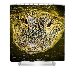 From The Series I Am Gator Number 5 Shower Curtain
